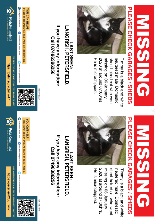 Lost pet flyers - Lost cat: Black and white cat called Timmy