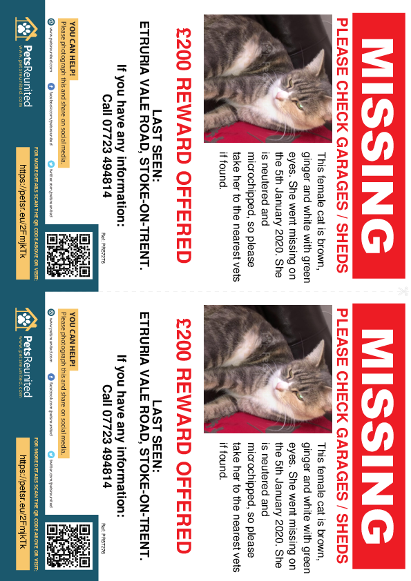 Lost pet flyers - Lost cat: Brown, ginger and white cat [name witheld]