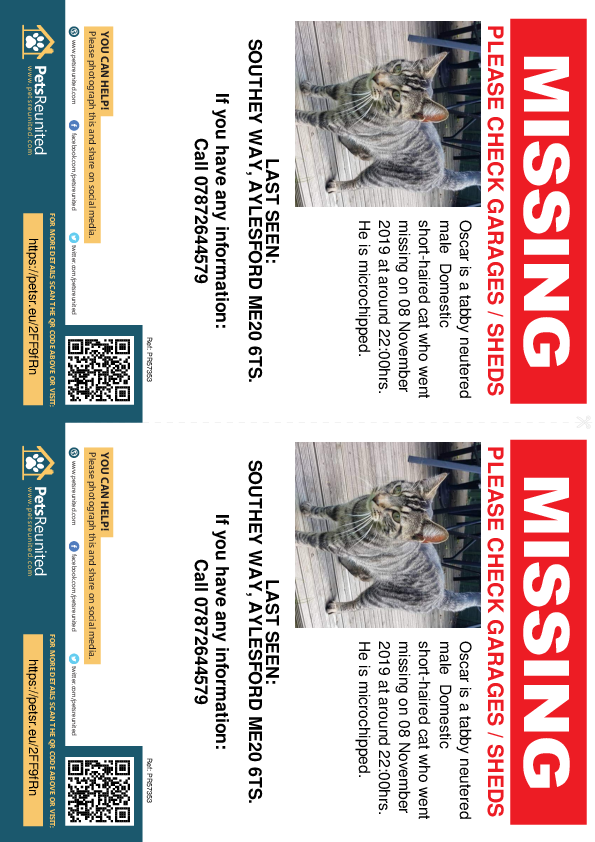 Lost pet flyers - Lost cat: Tabby cat called Oscar