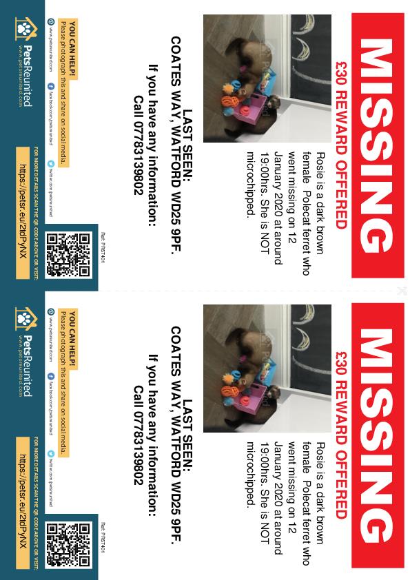 Lost pet flyers - Lost ferret: Dark brown Polecat ferret called Rosie
