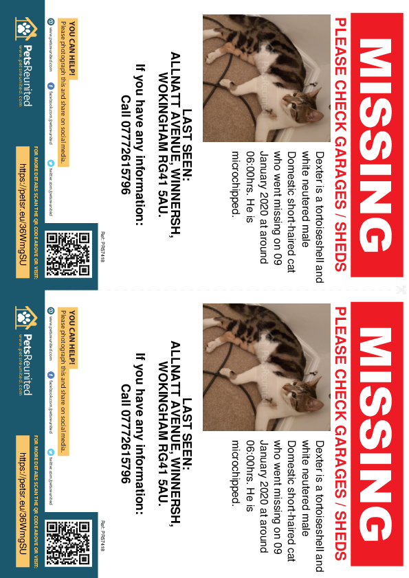 Lost pet flyers - Lost cat: Tortoiseshell and white cat called Dexter