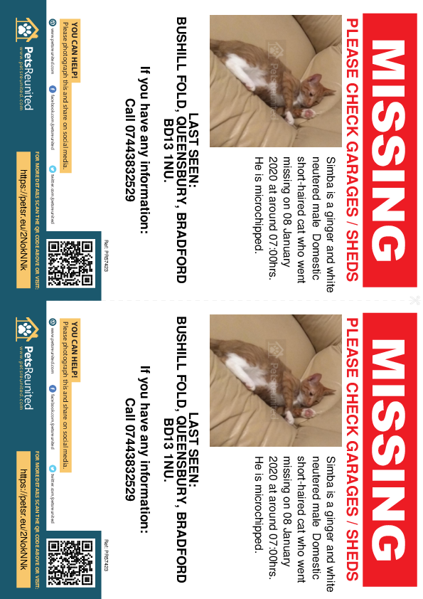 Lost pet flyers - Lost cat: Ginger and white cat called Simba