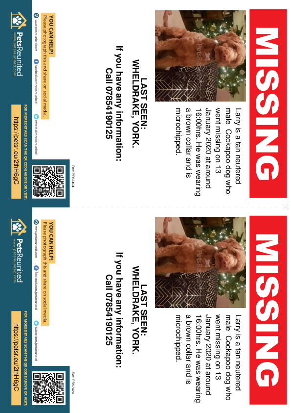 Lost pet flyers - Lost dog: Tan Cockapoo dog called Larry