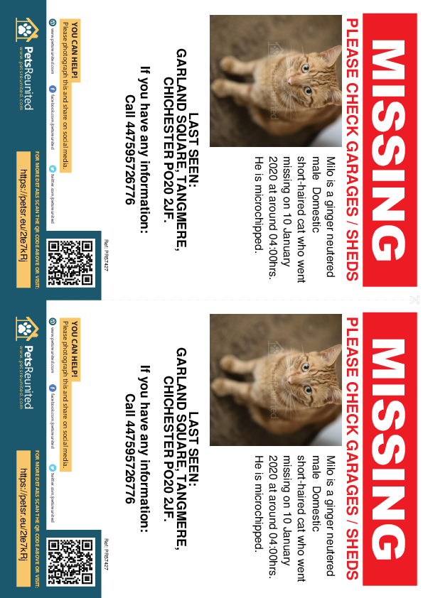 Lost pet flyers - Lost cat: Ginger cat called Milo