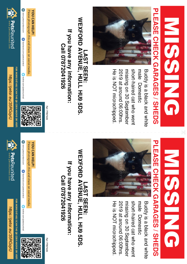 Lost pet flyers - Lost cat: Black and white cat called Buddy