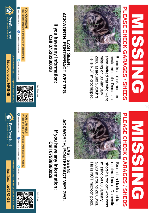 Lost pet flyers - Lost cat: Black and tan cat called Bruno