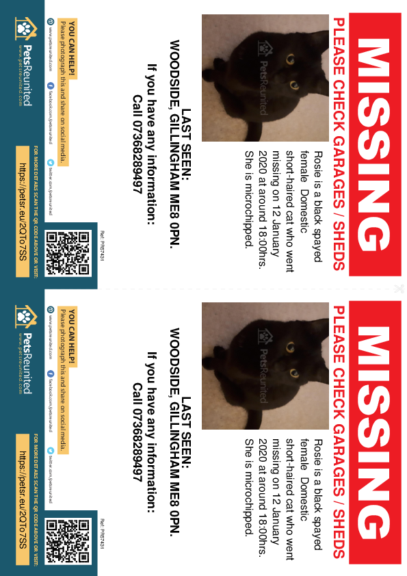 Lost pet flyers - Lost cat: Black cat called Rosie