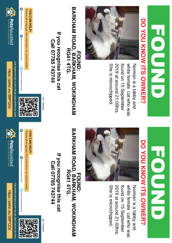 Found pet flyers - Found cat: Tabby and white cat called Norman