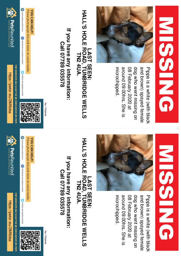 Lost pet flyers - Lost dog: White (with black and brown) dog called Pippa
