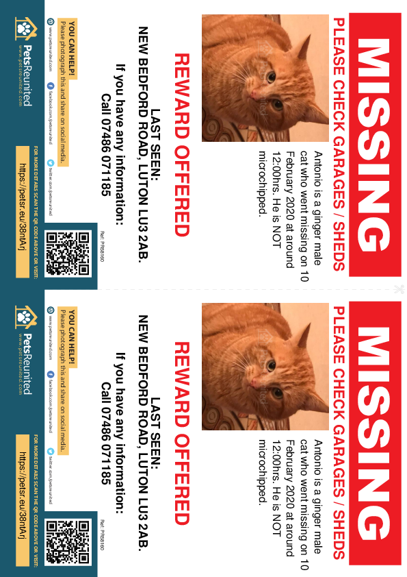 Lost pet flyers - Lost cat: Ginger cat called Antonio