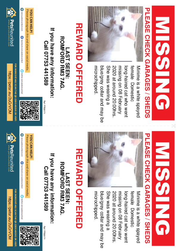 Lost pet flyers - Lost cat: White cat called Minime