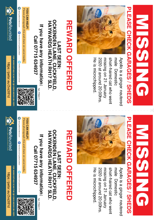 Lost pet flyers - Lost cat: Ginger cat called Apollo