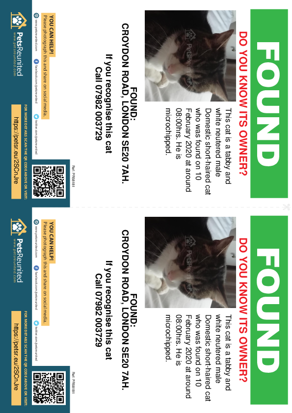 Found pet flyers - Found cat: Tabby and white cat