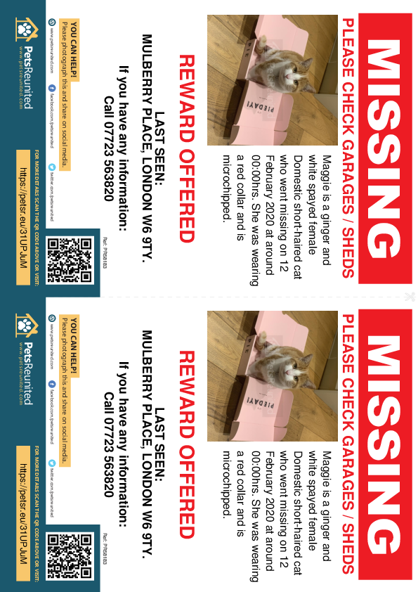 Lost pet flyers - Lost cat: Ginger and white cat called Maggie