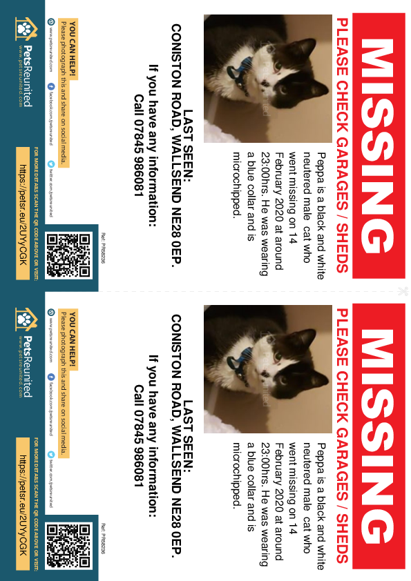 Lost pet flyers - Lost cat: black and white cat called Peppa