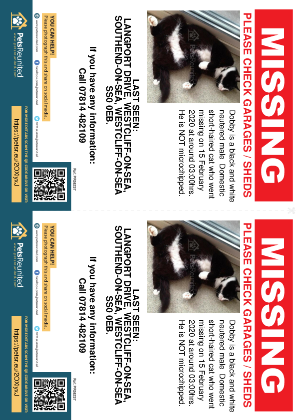 Lost pet flyers - Lost cat: Black and white cat called Dobby