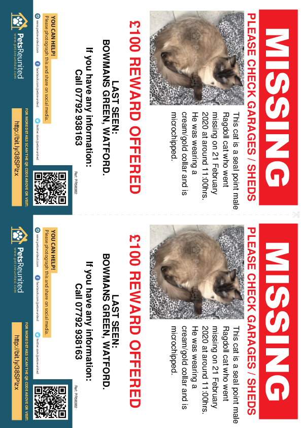 Lost pet flyers - Lost cat: Seal point Ragdoll cat [name witheld]