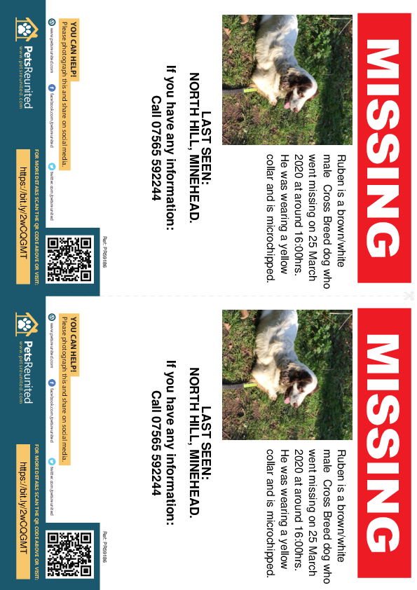 Lost pet flyers - Lost dog: Brown/White dog called Ruben