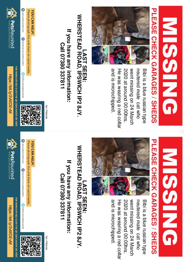 Lost pet flyers - Lost cat: Blue Russian type cat called Bibi