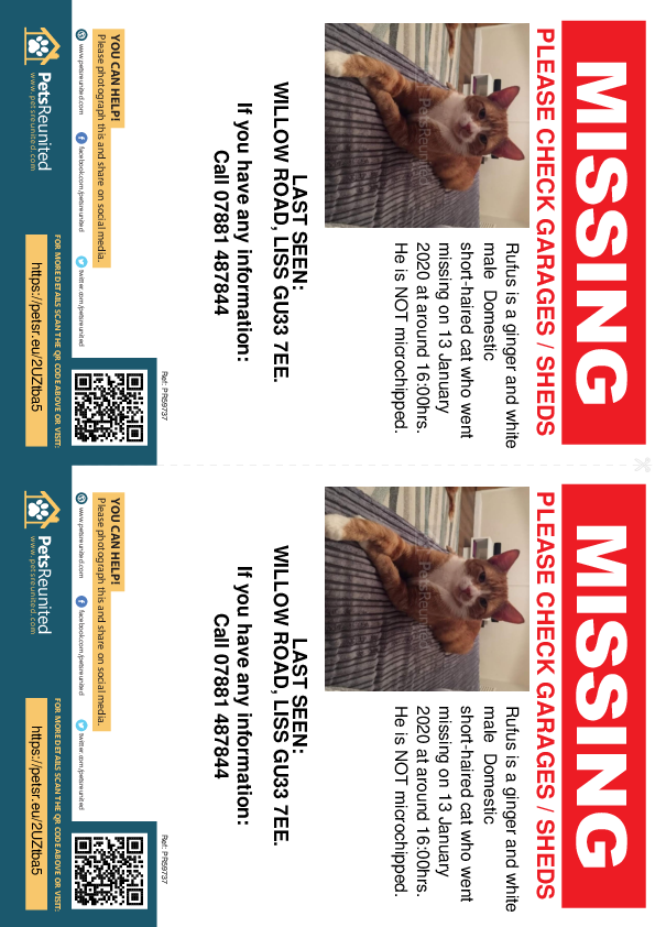 Lost pet flyers - Lost cat: Ginger and white cat called Rufus