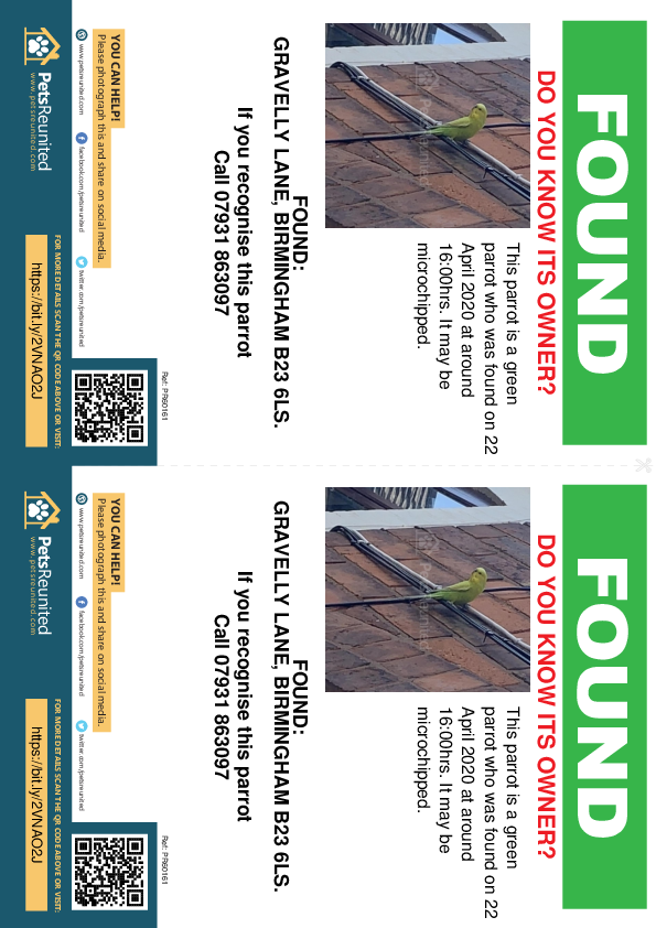 Found pet flyers - Found parrot: Green parrot