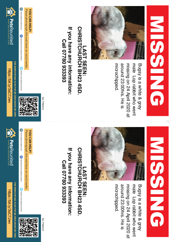 Lost pet flyers - Lost rabbit: White & grey Lop rabbit called Bugsy