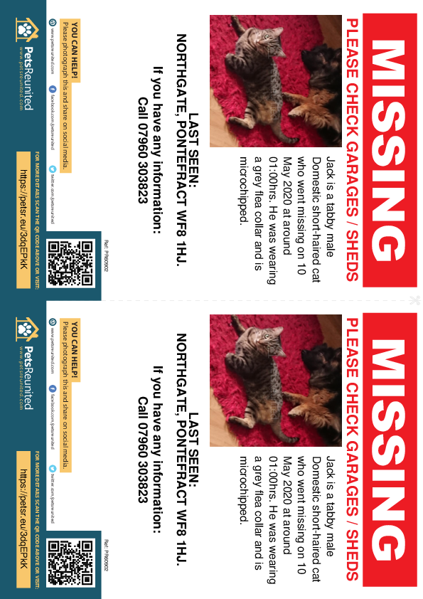 Lost pet flyers - Lost cat: Tabby cat called Jack