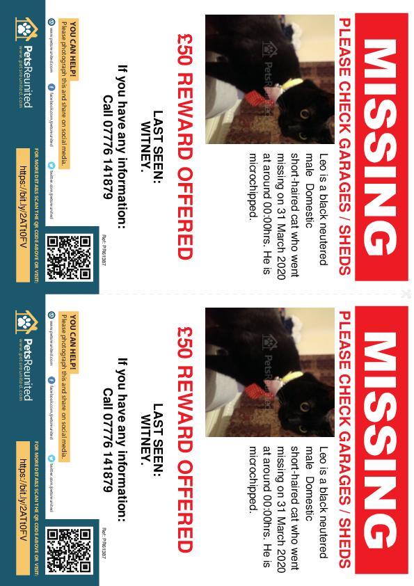 Lost pet flyers - Lost cat: Black cat called Leo