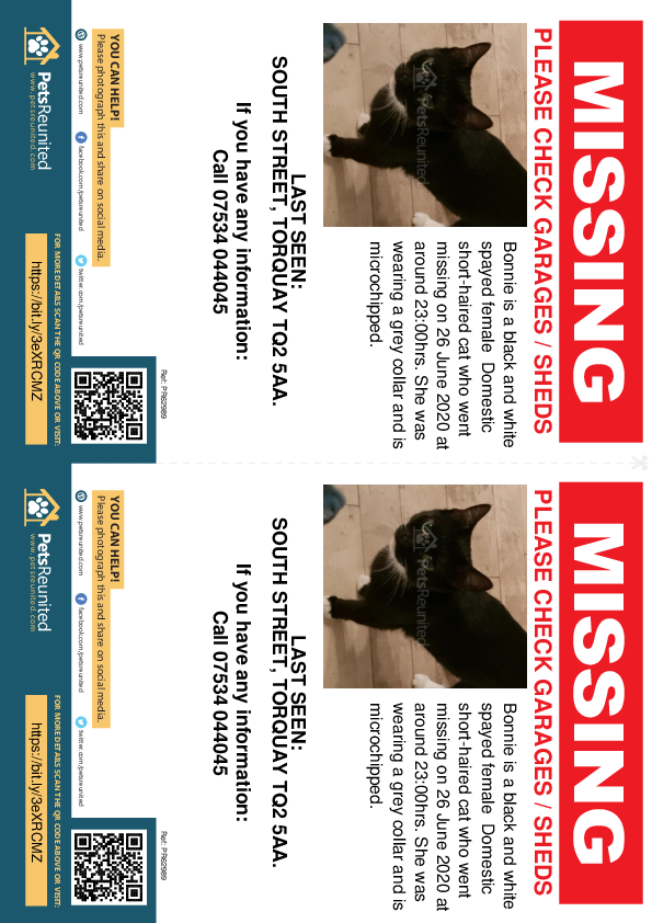 Lost pet flyers - Lost cat: Black and white cat called Bonnie