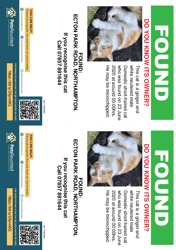 Found pet flyers - Found cat: Ginger and white cat