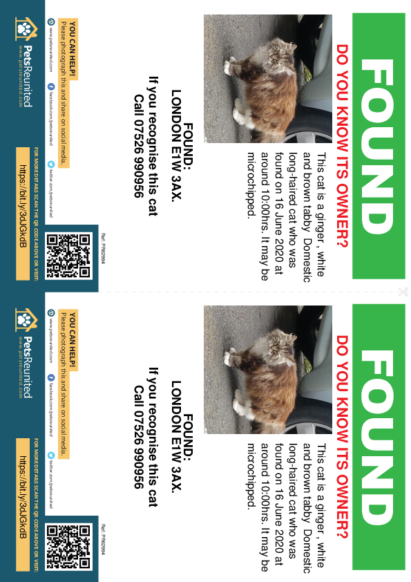 Found pet flyers - Found cat: Ginger , white and brown tabby cat