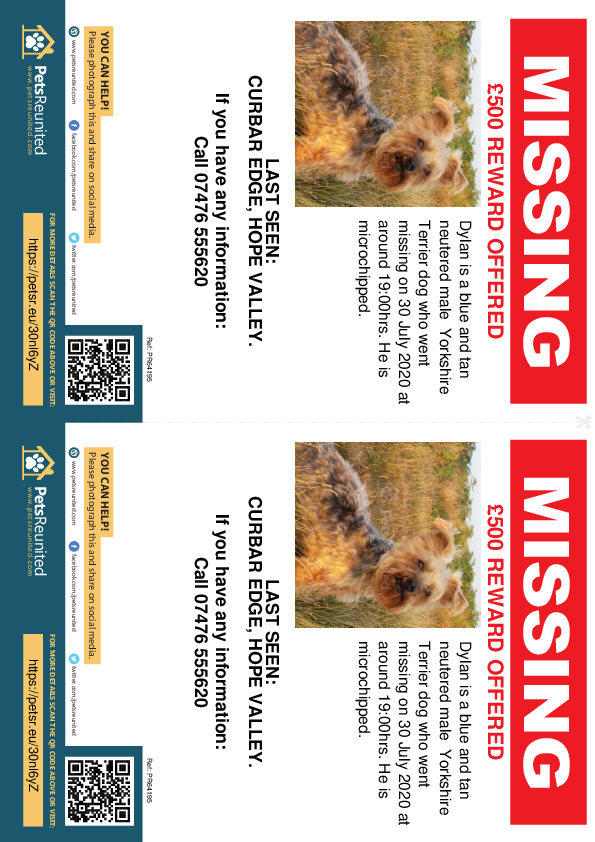 Lost pet flyers - Lost dog: Blue and Tan Yorkshire Terrier dog called Dylan