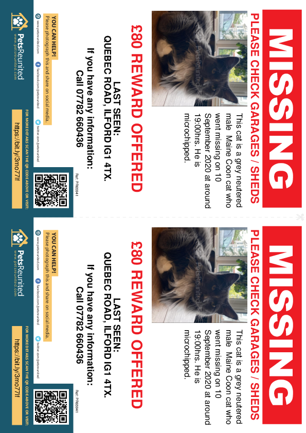 Lost pet flyers - Lost cat: Grey Maine Coon cat [name withheld]