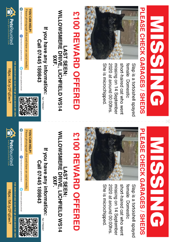 Lost pet flyers - Lost cat: Tortoishell cat called Slap