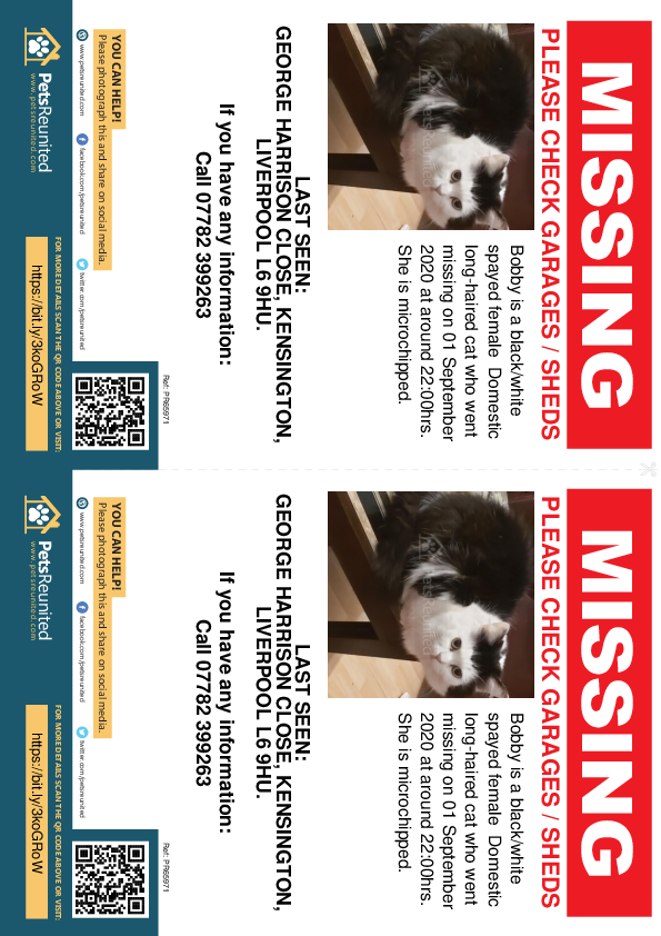 Lost pet flyers - Lost cat: Black/White cat called Bobby