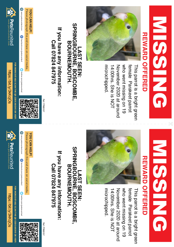 Lost pet flyers - Lost parrot: Bright Green Parakeet parrot [name withheld]