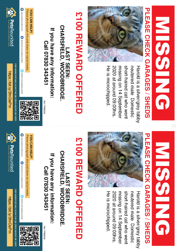 Lost pet flyers - Lost cat: Silver/Grey Tabby cat called Harold