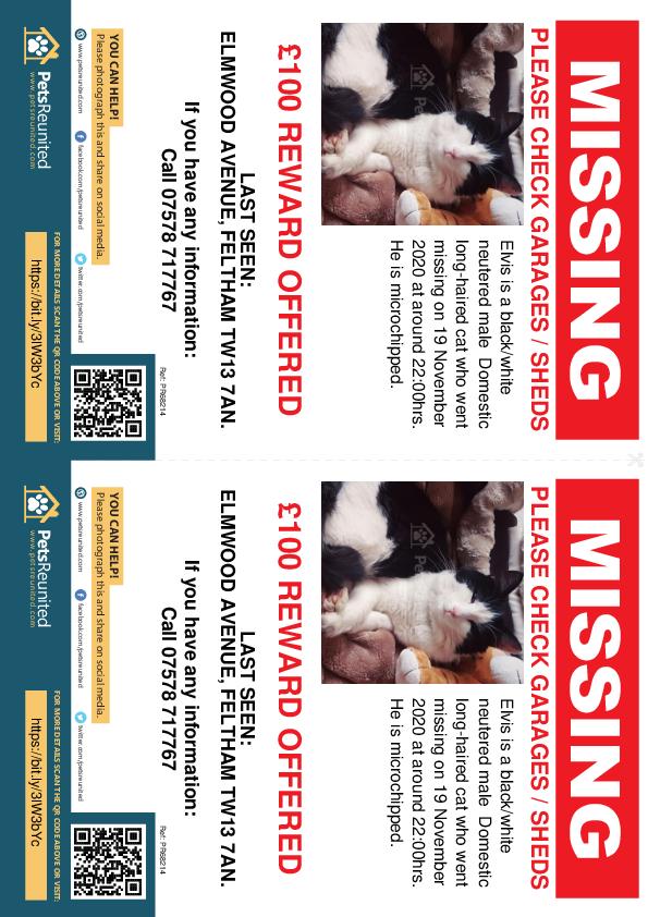 Lost pet flyers - Lost cat: Black/White cat called Elvis