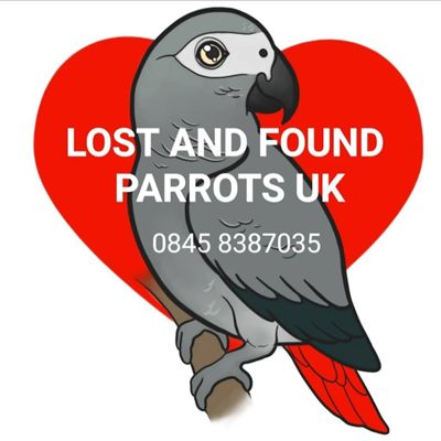 Lost and Found Parrots UK
