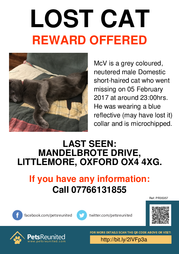 Lost pet poster - Lost cat: Grey cat called McV