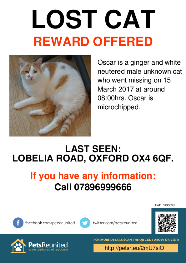 Lost pet poster - Lost cat: Ginger and white cat called Oscar