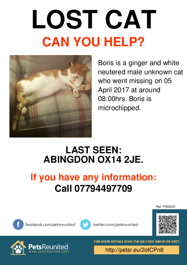 Lost pet poster - Lost cat: Ginger and White  cat called Boris
