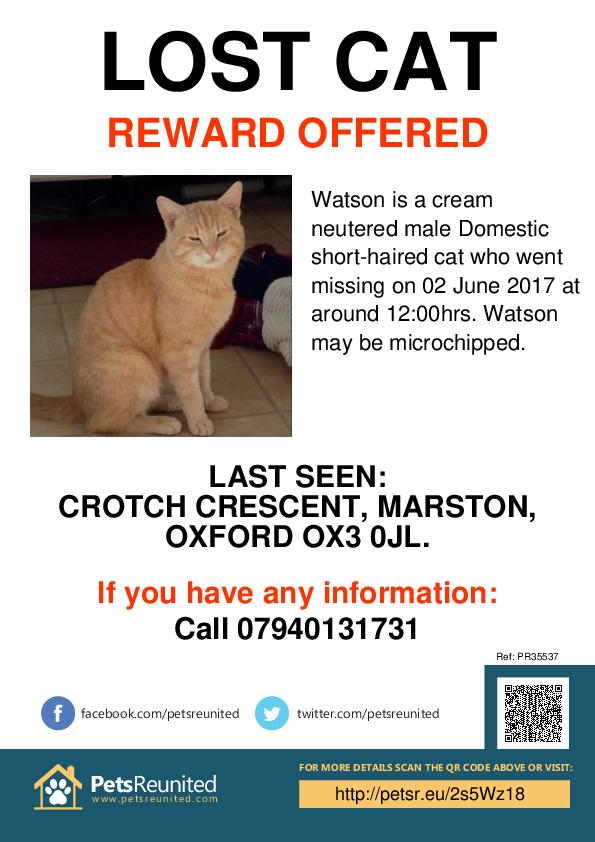 Lost pet poster - Lost cat: Cream cat called Watson