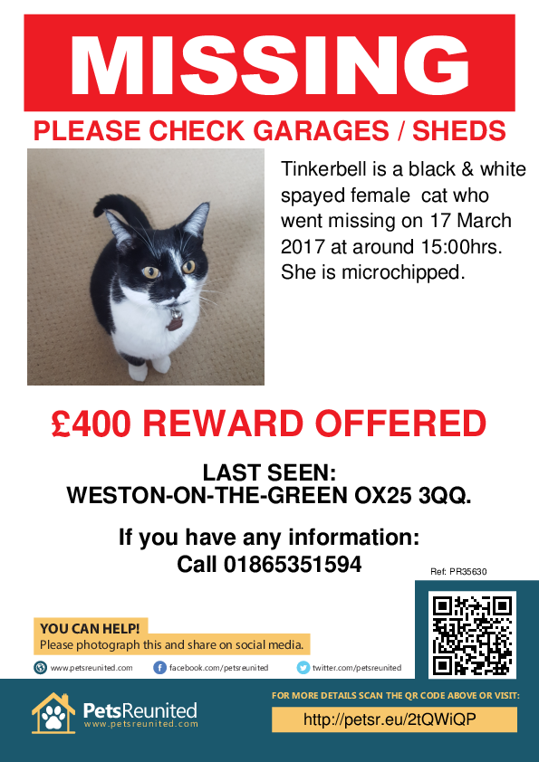 Lost pet poster - Lost cat: Black & white cat called Tinkerbell