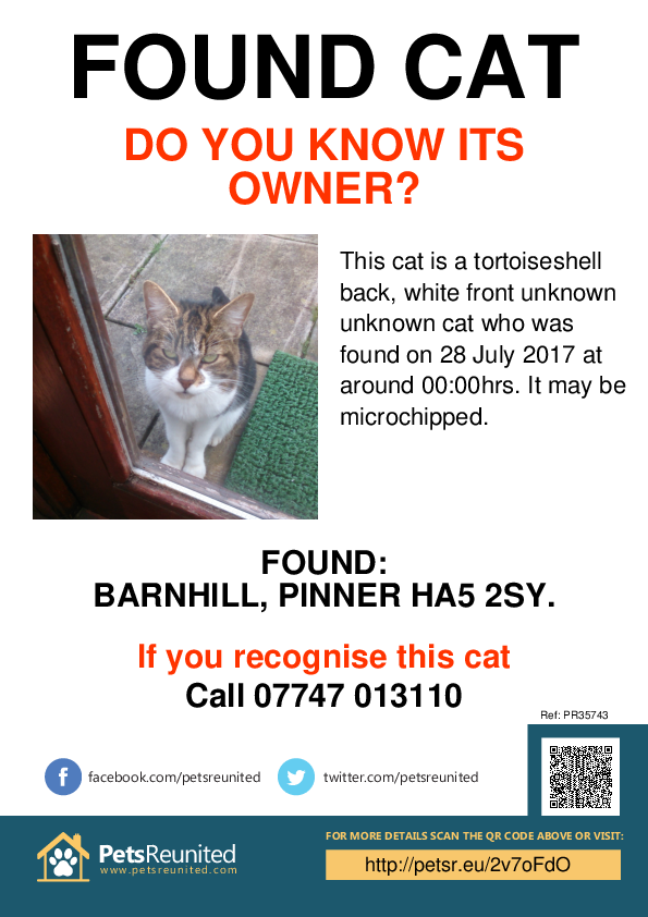 Found pet poster - Found cat: tortoiseshell back, white front cat