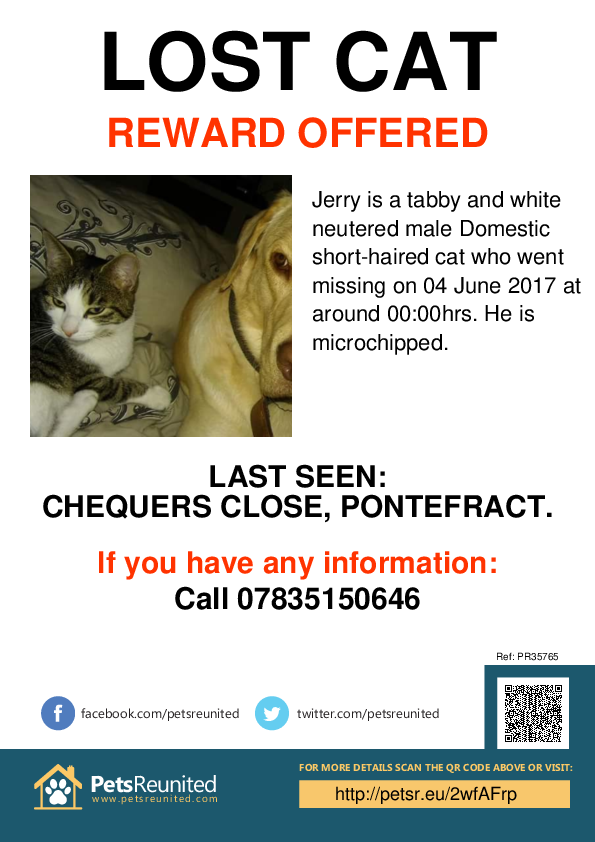 Lost pet poster - Lost cat: Tabby and white cat called Jerry