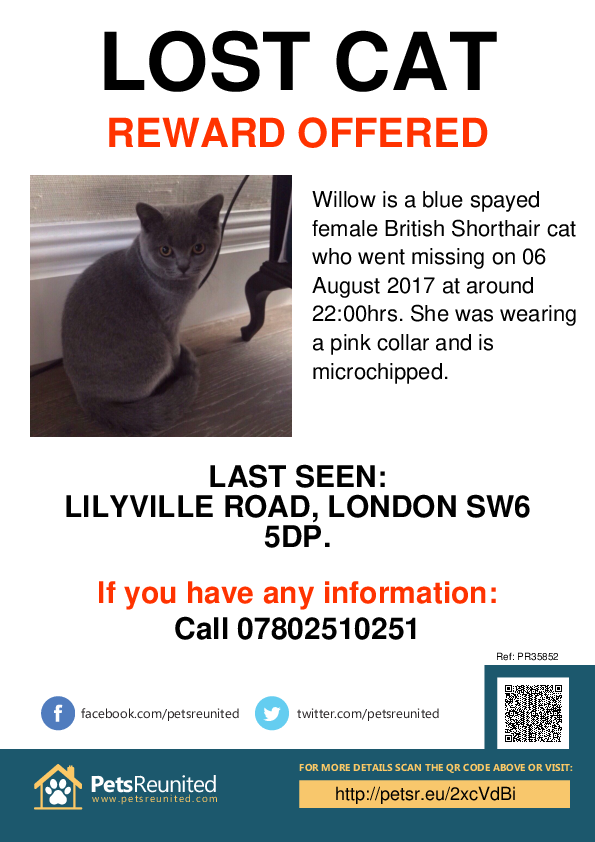 Lost pet poster - Lost cat: Blue British Shorthair cat called Willow