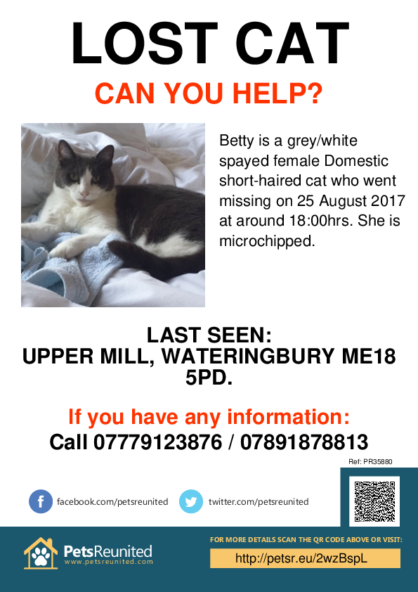 Lost pet poster - Lost cat: Grey/White cat called Betty