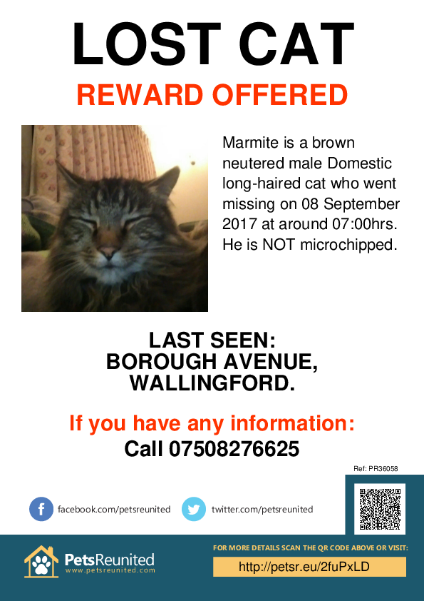 Lost cat: Brown cat called Marmite - Wallingford area, Oxfordshire