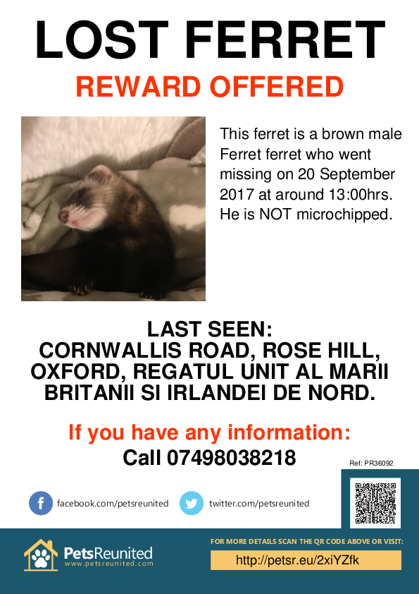 Lost pet poster - Lost ferret: Brown  ferret [name witheld]